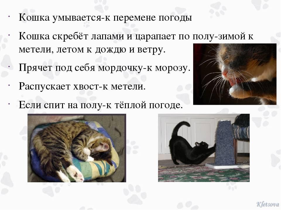 Почему кошки часто умываются: 7 основных причин, что делать если перестают вылизывать шерсть