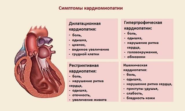 Гипертрофическая кардиомиопатия у кошек лечение - муркин дом