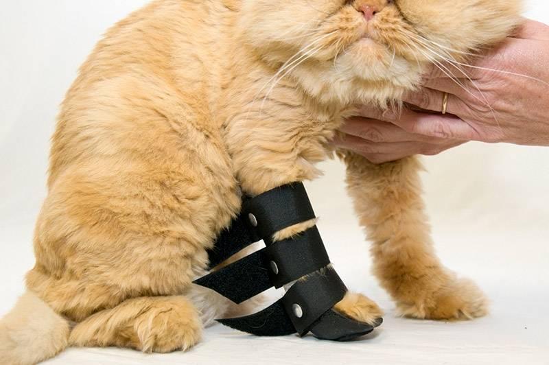 Перелом лапы у собаки: как определить, что делать, как лечить в домашних условиях