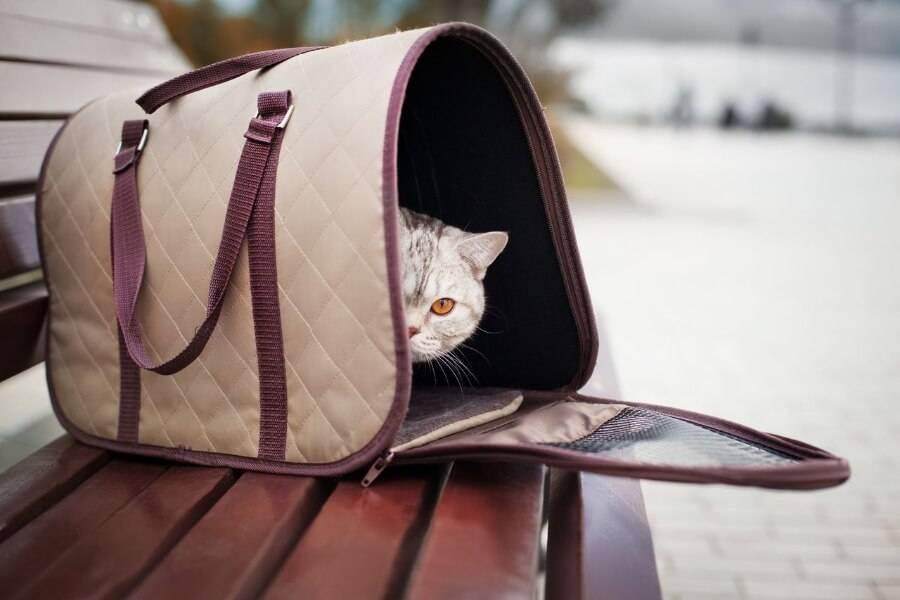 Как перевезти кошку в самолете по россии и за границу