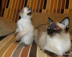 Как назвать кошку? как можно назвать кошку девочку и кота мальчика? - petstime.ru