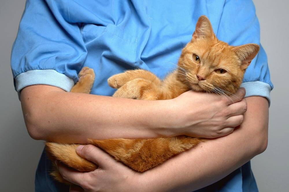 Жидкий стул у кошки: причины, виды поноса, о чем говорит продолжительность и цвет диареи, лечение в домашних условиях