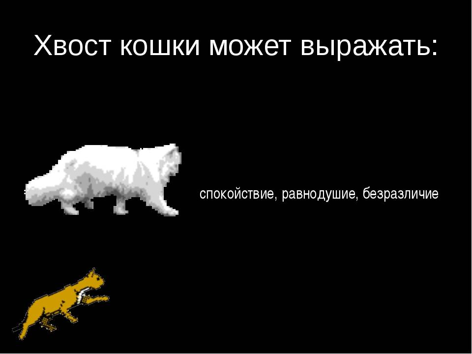Почему нельзя дергать котов и кошек за хвост | можно ли