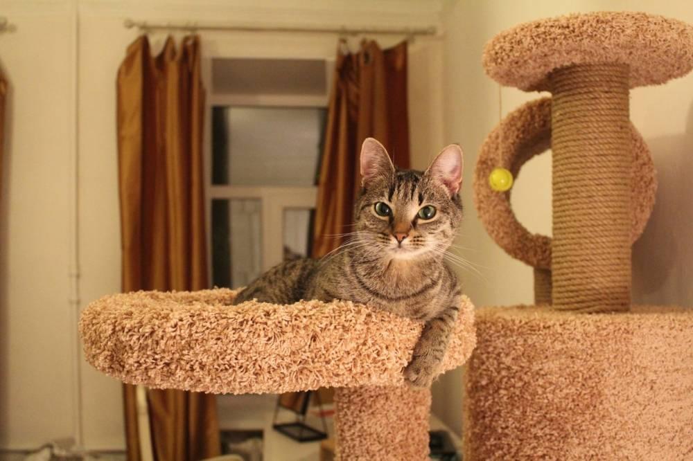 Как быстро приучить котенка и взрослую кошку к когтеточке в квартире