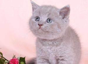 Когда у котят меняются зубы, в каком возрасте происходит смена молочных на постоянные, как ухаживать за питомцем в этот период