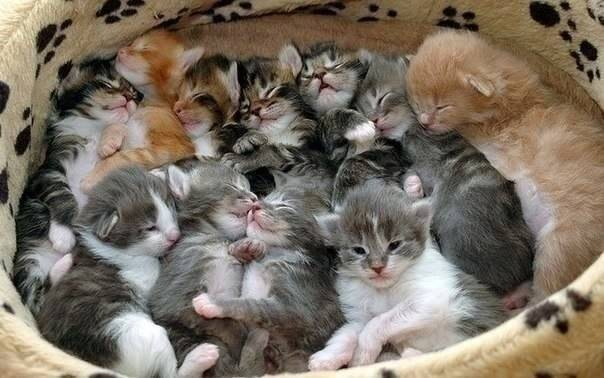 С какого возраста можно начинать давать котятам корм, когда пора их подкармливать, приучать к еде?