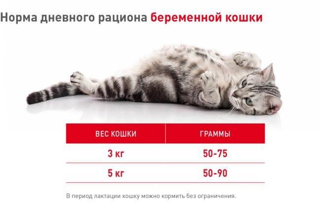 """Чем кормить беременную и кормящую кошку   блог ветклиники """"беланта"""""""