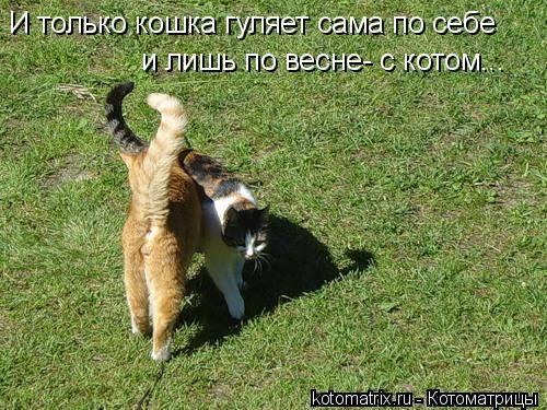 Как успокоить кошку во время течки в домашних условиях, как ей помочь, если просит кота