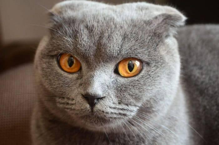 Почему у кошки слезятся глаза после еды? почему у кошки слезятся глаза: выяснение причины