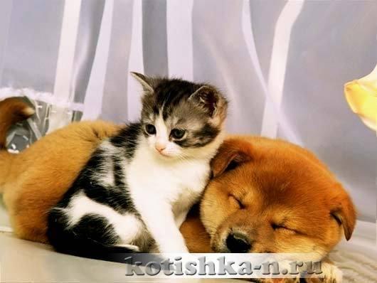 Как подружить кошку с собакой в квартире - взрослых, котенка, способы, которые работают