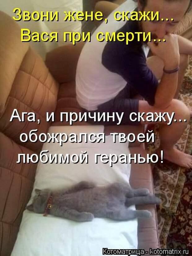 Как успокоить кошку | гуляет, орет, можно ли давать успокоительное