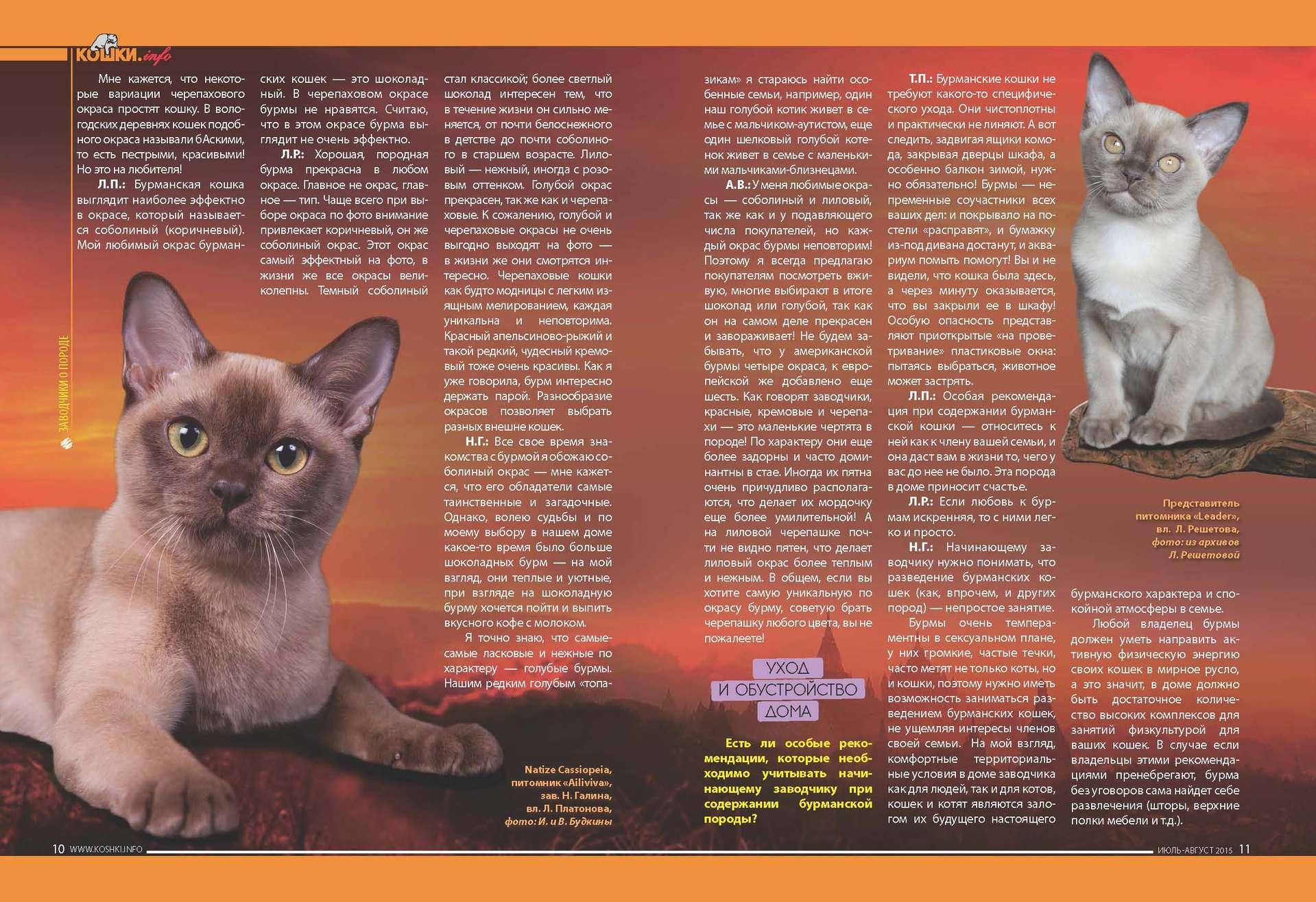 Описание бурманской кошки