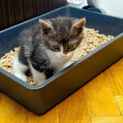 Кошка не признаёт новый наполнитель