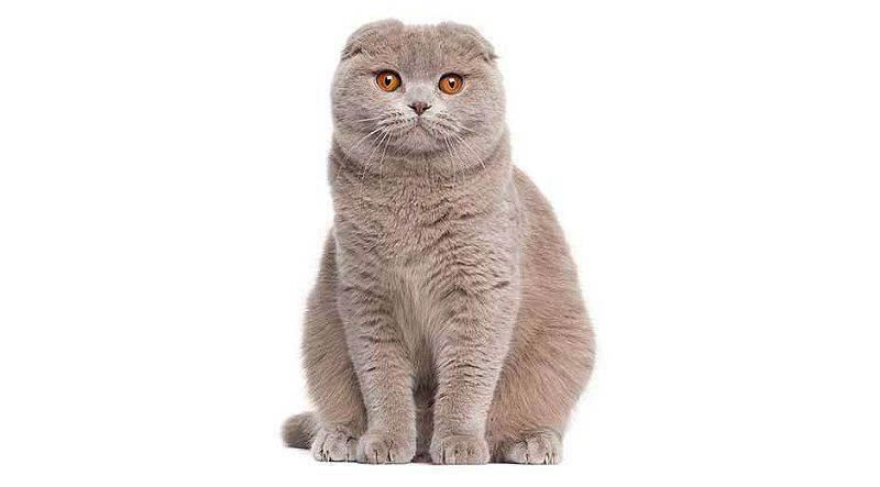 Кошки и дети, аллергия на кошек у детей, породы кошек для детей, какую завести | кошки - кто они?