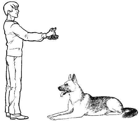 С чего начинать дрессировку собак новичку?