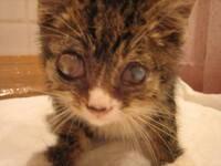 Могут ли кошки плакать, как человек? могут ли кошки плакать: научный факт