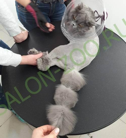 Груминг кошек: особенности проведения процедуры
