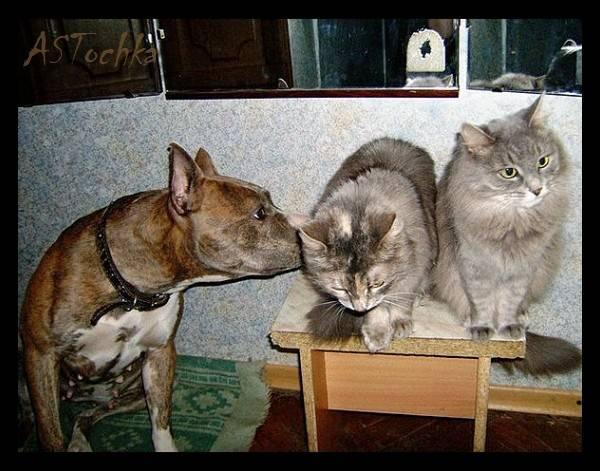 Как подружить кошек между собой в квартире: разбираемся досконально