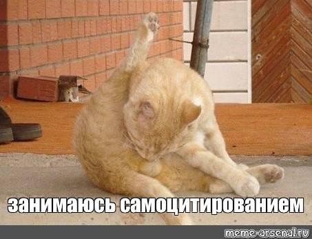 Кот постоянно лижется под хвостом — причины и нужно ли беспокоиться | кот и кошка