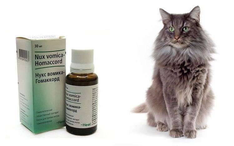 Слабительное для кошек, 5 разновидностей: какое средство можно дать при запоре?