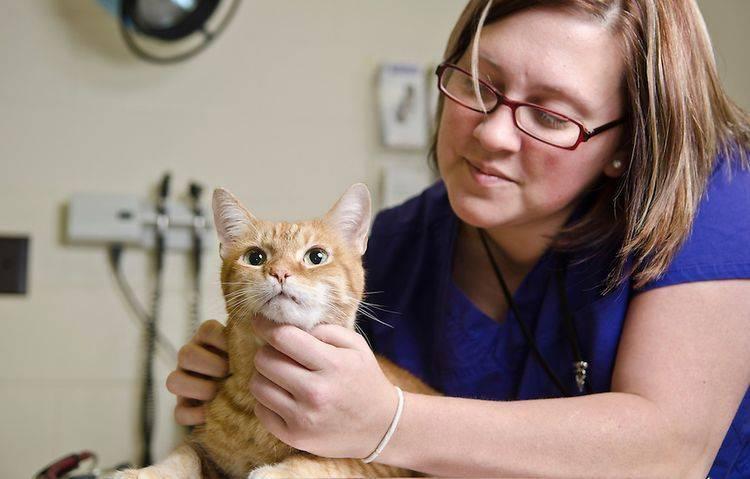 Что дать кормящей кошке от аллергии