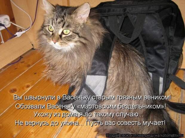 Почему в квартире кошки долго не живут, не приживаются? не приживаются коты в доме почему.