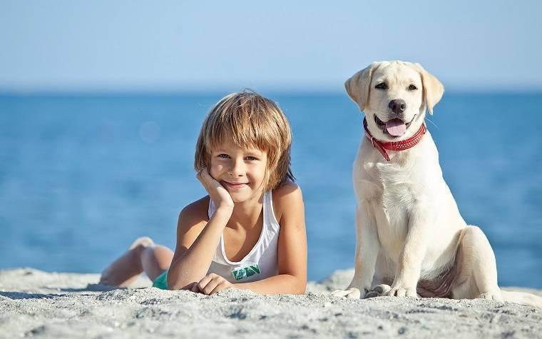Нужны ли ребенку домашние животные? нужно ли заводить домашнее животное для ребенка: собаку или кошку