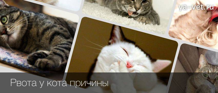 Кота тошнит белой пеной и он ничего не ест: причины, лечение отравление.ру кота тошнит белой пеной и он ничего не ест: причины, лечение