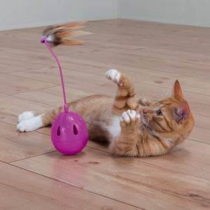 Кот шуша пьет из аквариума