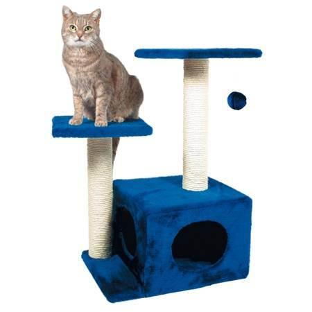 Правильное воспитание котенка или как воспитать умного кота