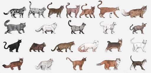 Топ 5 самых агрессивных пород кошек в мире