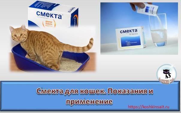ᐉ смекта для кошек и котят при поносе: дозировка, как давать - kcc-zoo.ru