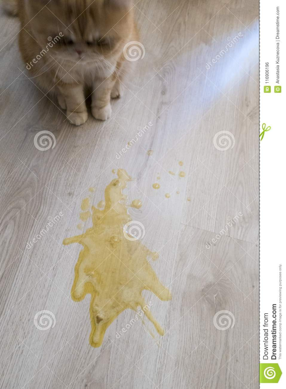 Кошку рвет желчью: причины, методы лечения