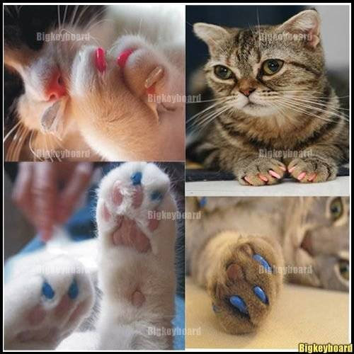 Антицарапки для кошек и котов | фото, цена, инструкция, отзывы