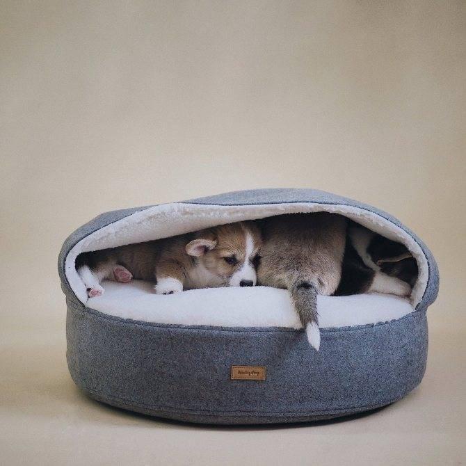Как приучить котенка или взрослую кошку к домику или лежанке, чтобы питомец ночью спал на своем месте? лежанка для кошки: ваш правильный выбор нужен ли кошке лежак