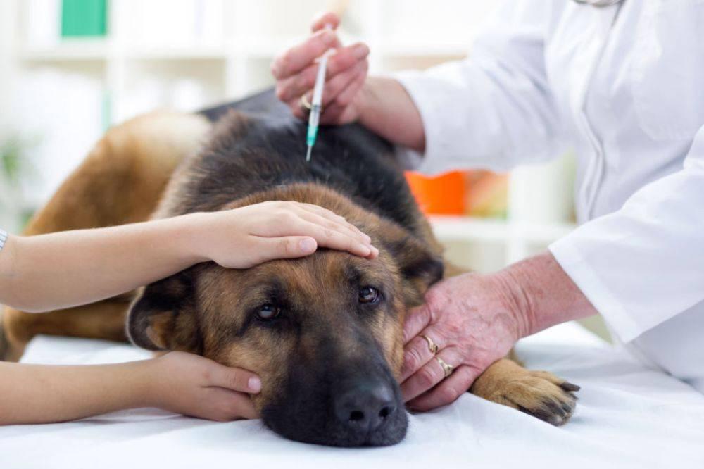 Эвтаназия кошек – в каких случаях врачи рекомендуют прибегнуть к процедуре.