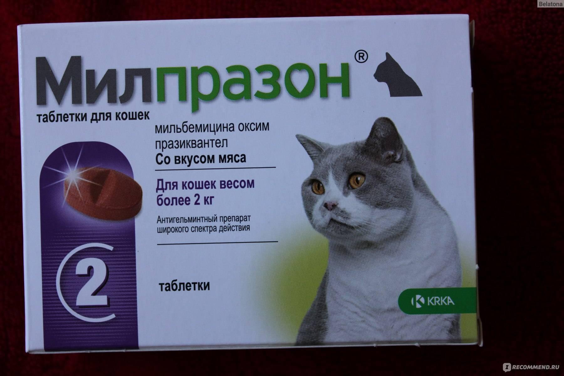 Сколько раз в день давать кошке активированный уголь