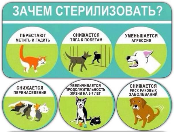 Стерилизация кошки: плюсы и минусы. сколько стоит стерилизация кошек?