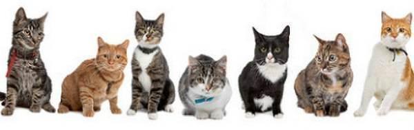 «это впервую очередь работа свладельцами»: сколько зарабатывает ассистент ветеринара