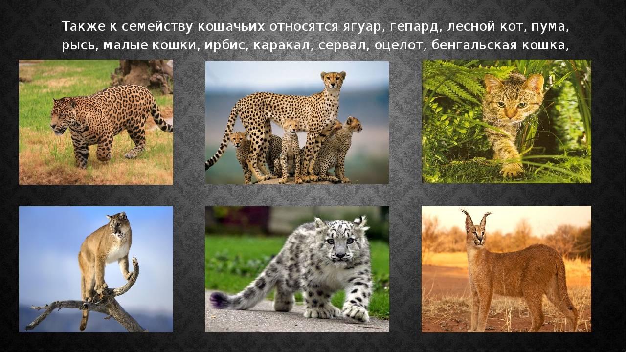 Названия хищных животных: список, виды, описание