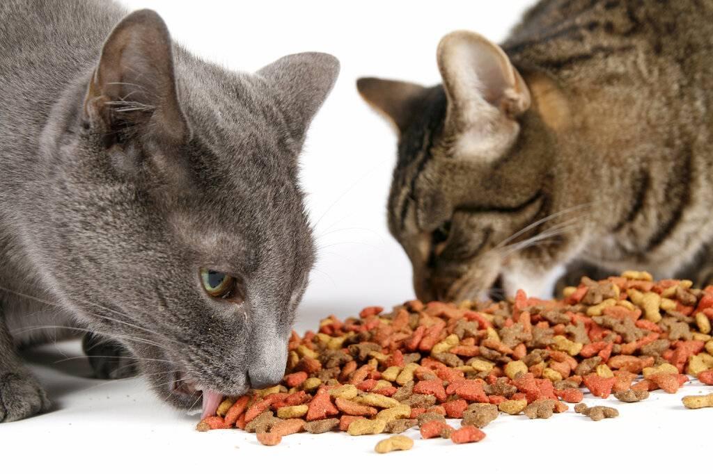 Почему кошка не ест сухой корм или перестала это делать