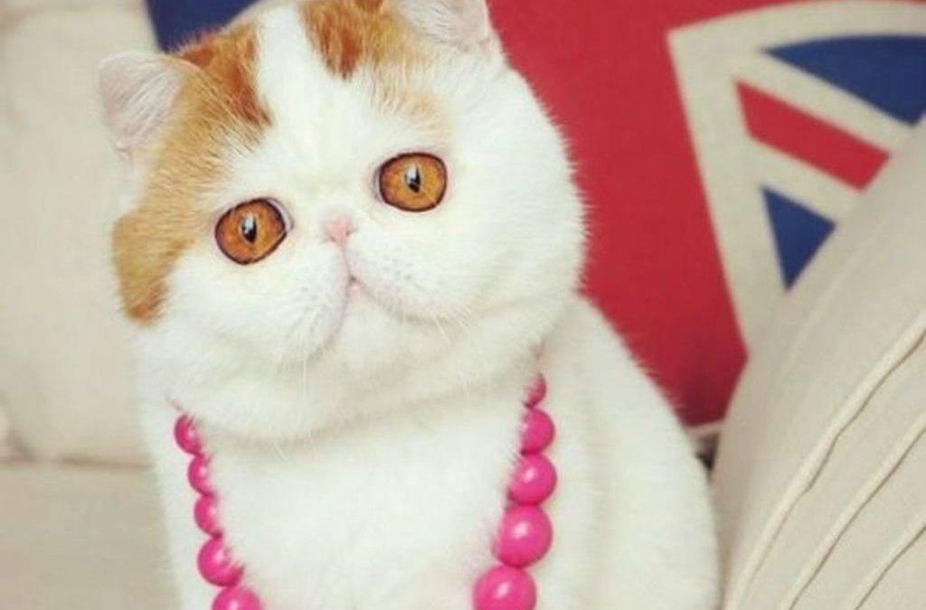 Самые красивые кошки в мире:  топ 15 с фото