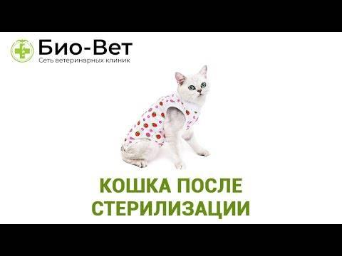 Кошка не ест после стерилизации: причины и что делать