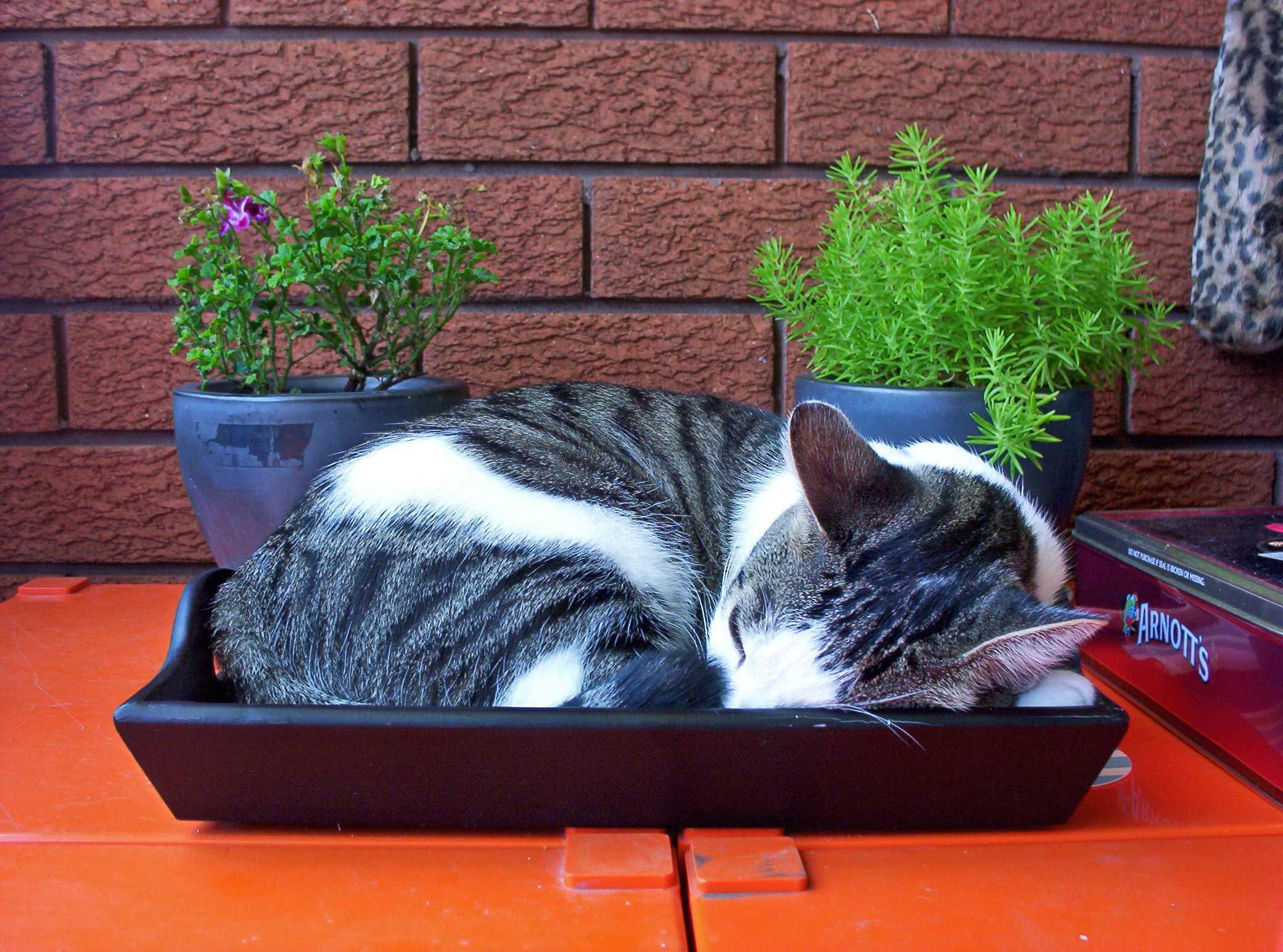 Как быстро приучить котенка к лотку без наполнителя?