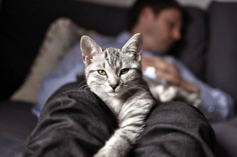 Кошки всегда садятся на больное место мем. почему кошка на больное место человека ложится | интересные факты