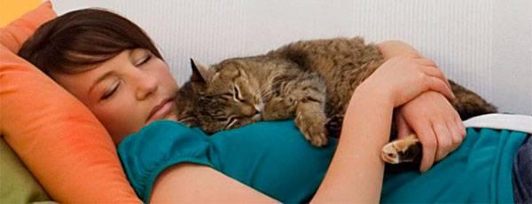 Почему кошка любит ложиться на человека?