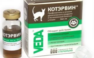 Препарат «котэрвин»: инструкция по применению для кошек