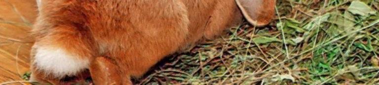 Чем вызвано воспаление кишечника у кошек: первые признаки, лечение и профилактика