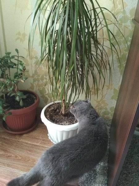Что делать если кошка ест цветы | кот и кошка