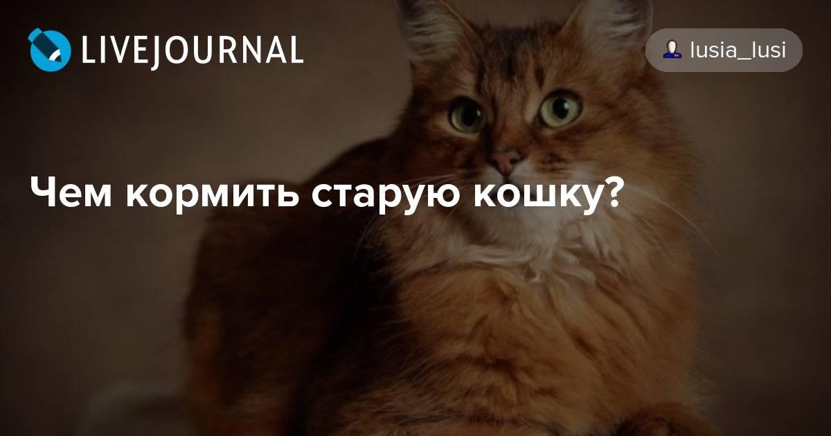 Как правильно кормить кошку и кота